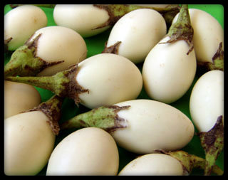 eggplant white aubergine